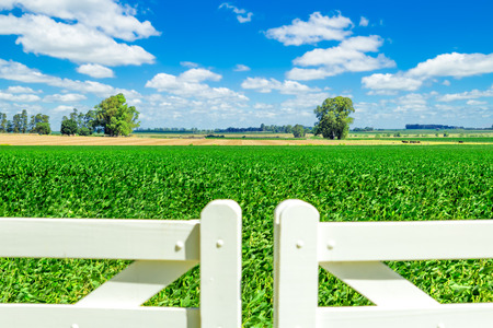 Beautiful farmland behind a pristine white picket fence gate on a sunny day  Stock Photo