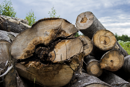 workable: Felled logs against the blue sky Stock Photo