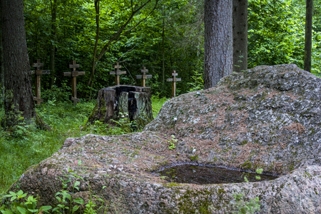 Abandoned crosses of graves in a pine forest