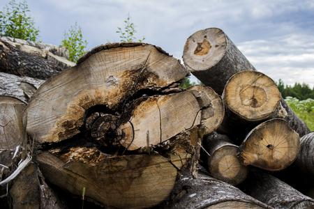 Felled logs against the blue sky Stock Photo