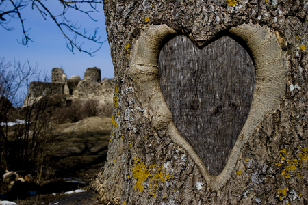 Big heart on the bark of a tree