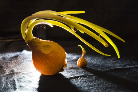 nourishing: Onion on a black background