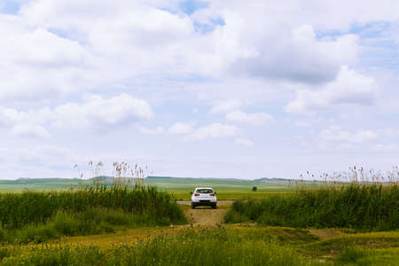 Rear view of the white car among the blooming spring field. Off-road solo travel, modern nomads. Road trip concept, countryside meadow. Scenic background with copy space