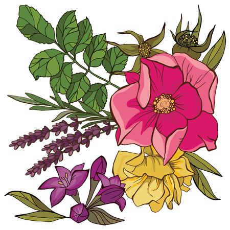 flowers summer vector set