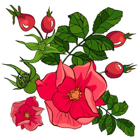 red wild rose set
