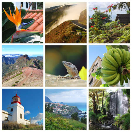 bird of paradise plant: Madeira island collage with ocean and mountain scenes