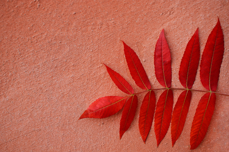 Red autumn leaves on peach-colored background.