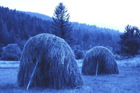 Typical Ukrainian haystacks on a meadow in the village with a beautiful mountaneous landscape in Western Ukraine, Carpathian mountains toned blue. Green tourism. Main color trend of 2020. Banco de Imagens