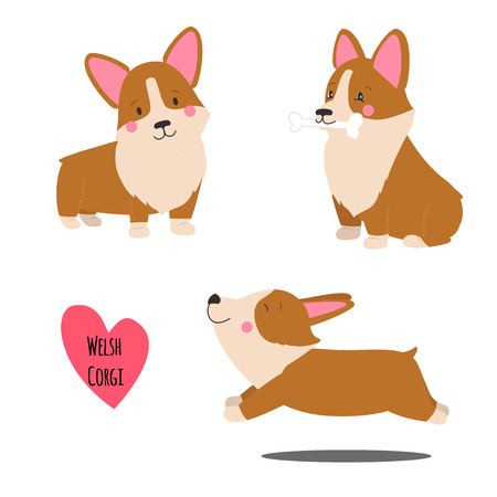 Cute welsh corgi set in different poses. Funny corgi vector illustration. Portrait of a dog for decoration and design