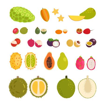 Set of flat cartoon vector illustration tropical exotic fruits.  Isolated objects. Çizim