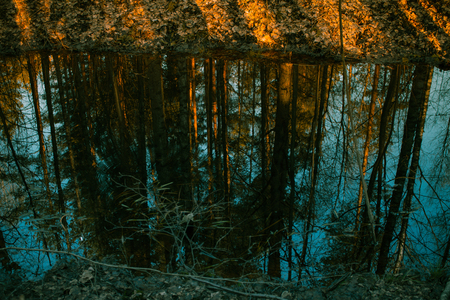 flipped: Pine forest reflected in the water at sunset Stock Photo