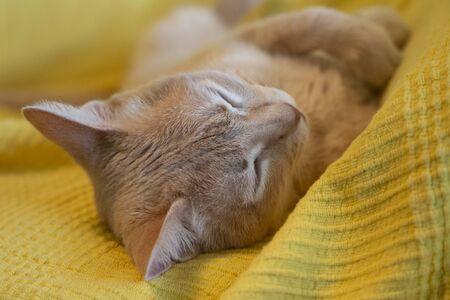 Cat sleeping deeply in its mouth