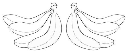 cliche: El manojo de cuatro pl�tanos en el fondo blanco de la colecci�n del jard�n encantador