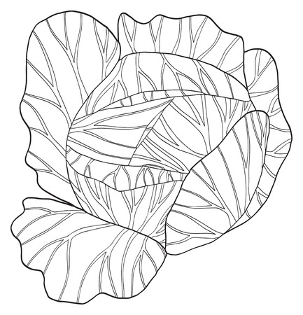 delightful: Round cabbage in the Delightful garden collection