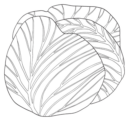 coloration: Single round cabbage in the Delightful garden collection Illustration