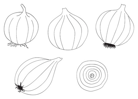 coloration: Set of five onions on white in the Delightful garden collection