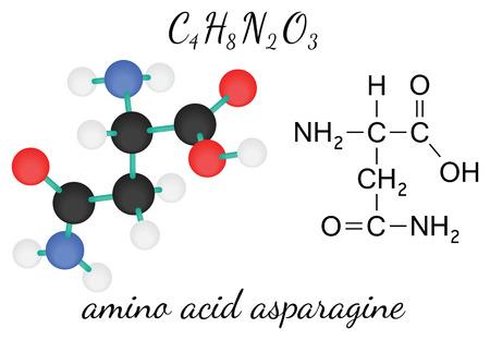 3d nitrogen: C4H8N2O3 asparagine 3d amino acid molecule isolated on white