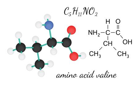acido: C5H11NO2 valina molécula de ácido amino 3d aislado en blanco