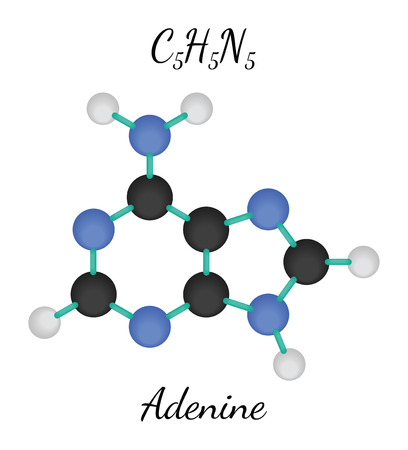 adenine: C5H5N5 adenine 3d molecule isolated on white