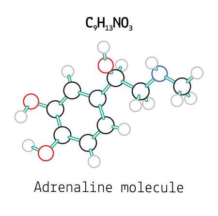 adrenalin: C9H13NO3 adrenaline 3d molecule isolated on white