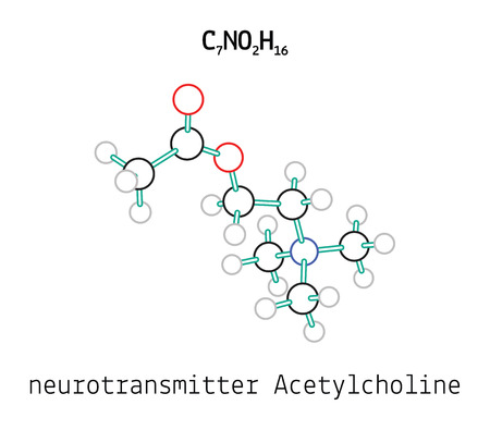 acetylcholine: C7NO2H16 Acetylcholine 3d molecule isolated on white Illustration