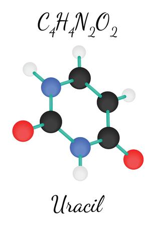 uracil: C4H4N2O2 uracil 3d molecule isolated on white