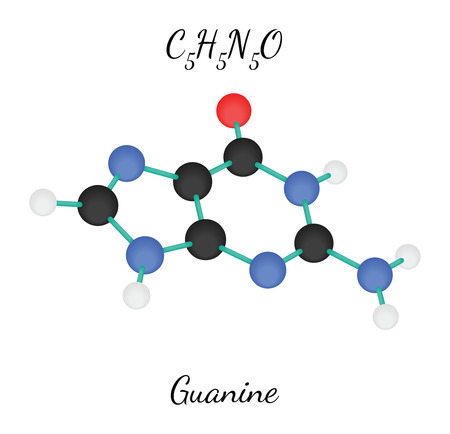 guanine: C5H5N5O guanine 3d molecule isolated on white