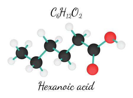acido: C6H12O2 hexanoico 3d molécula de ácido aislado en blanco
