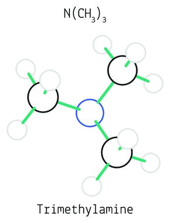 amine: Trimethylamine C3H9N molecule isolated on white in vector Illustration