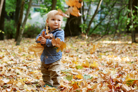 Cute toddler staying among yellow leaves and looking on the falling maple leaves