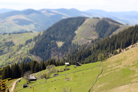 Beautiful landscape of the Ukrainian Carpathian village, green high mountains, old rural houses with cows and sheep, horizontal summer outdoor, tilt shift lens effect image, no people, selective focus