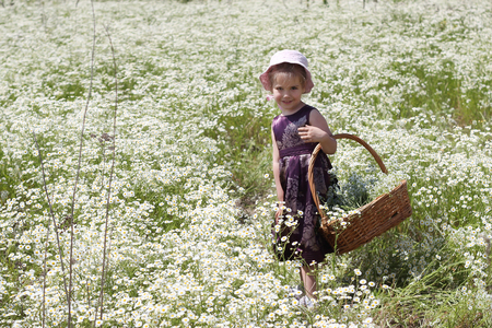 Cute little girl wearing beautiful dress walking through the path among the chamomile field in summer, child with huge bouquet of white flowers in basket, beauty and fashion, summer outdoor