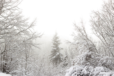 Beautiful winter landscape o Ukrainian Carpathian Mountains with spruce forest covered with snow, fog and sun, horizontal winter outdoor, no people, selective focus Imagens