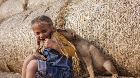 Happy cute 7-8 years old girl in trendy jeans overall and orange t-shirt playing with baby puppy on rolls of hay bales in field, summertime in countryside, childhood and dreams, outdoor lifestyle