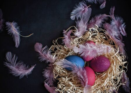 Alternative Easter composition in dark style with classic blue and pink color eggs, feather and hands of senior woman over black background, spring season holidays concept