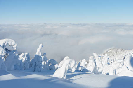 Winter mountain landscape. Imagine view on trees under the snow and clouds. High quality photo