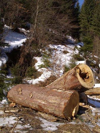 lanscape: logs