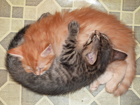 two sleeping cuddling cats together