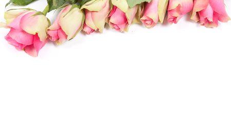 border flowers: Flowers frame isolated on white card blank
