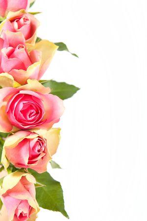 borde de flores: Marco de flores aislado en tarjeta blanca en blanco
