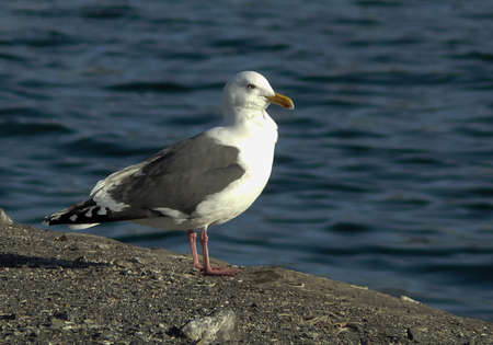 Close up view of white bird seagull sitting on the ground. Wild seagull with a sea blue background.