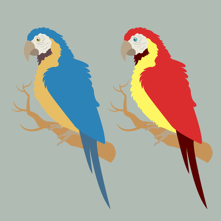 macaw: Illustration of two macaw in different colors Illustration