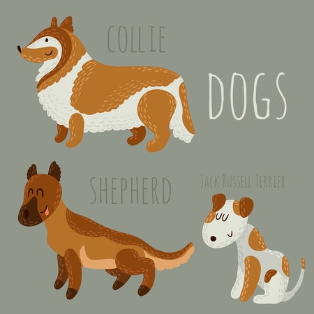jack russell: Set of cute dogs: Jack Russell Terrier, collie and shepherd.