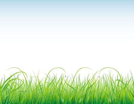 Bright, natural background with the fresh grass and clear drops  Illustration