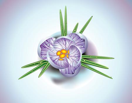 warmly: First spring flower