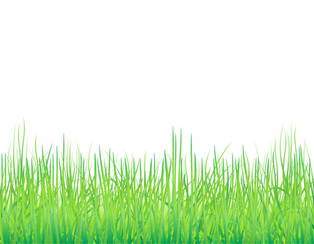 Natural background with the fresh grass Illustration
