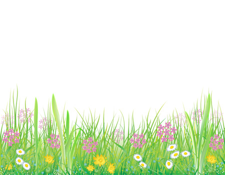 botanica: Bright, natural background with the fresh grass and wild flowers Illustration