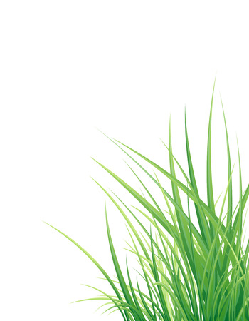Spring green grass isolated on the white background Illustration