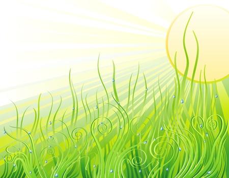 ochtend dauw: Background with the fresh green grass and drops
