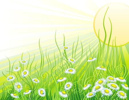 Prato soleggiato con fiori